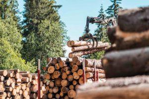 Предприятия и учебные заведения Поморья подключились к проекту по формированию кадрового резерва для лесной отрасли