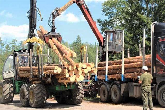 Не упусти возможность пройти собеседование — крупные предприятия лесной отрасли набирают кадры